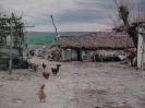 ΚΟΥΡΟΥΤΖΙΚΙΟΙ(ΚΡΟΤΑΛΟΣ)_2